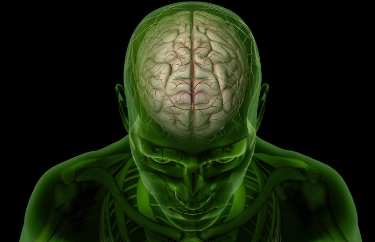 Anatomija mozga: 4 rebra, strukture i funkcije